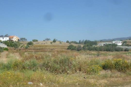 Field in Pyrgos, Limassol