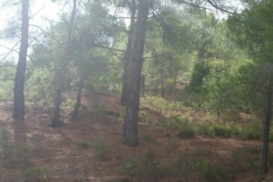 Land for sale in Moniatis